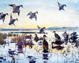 Art Prints of Ducks alighting on a Marsh by Frank Weston Benson