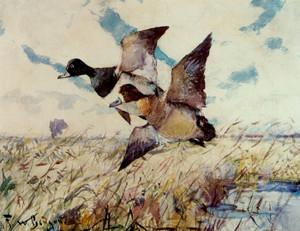 Art Prints of Blue Bills by Frank Weston Benson