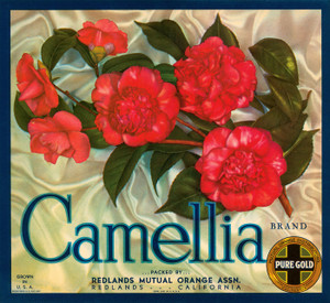 Art Prints of 033 Camellia Brand Oranges, Fruit Crate Labels