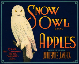 Art Prints of 037 Snow Owl Apples, Fruit Crate Labels