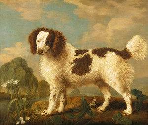 Art Prints of Brown and White Norfolk or Water Spaniel by George Stubbs