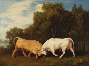 Art Prints of Bulls Fighting by George Stubbs