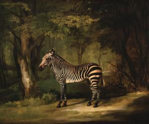 Art Prints of Zebra by George Stubbs