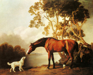 Art Prints of Bay Horse and White Dog by George Stubbs
