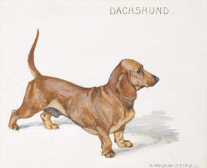 Art Prints of Dachshund by George Vernon Stokes