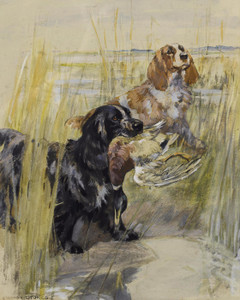 Art Prints of Cocker Spaniels by George Vernon Stokes