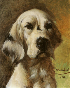 Art Prints of Black and White English Setter by Gustav Muss-Arnolt