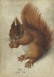 Art Prints of Red Squirrel by Hans Hoffmann