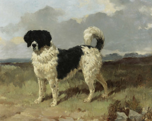 Art Prints of A Newfoundland Landseer in a Landscape by Harry Hall