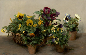 Art Prints of Pansies 1874 by Henri Fantin-Latour