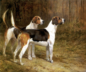 Art Prints of Two Foxhounds, No. 1 by Heywood Hardy