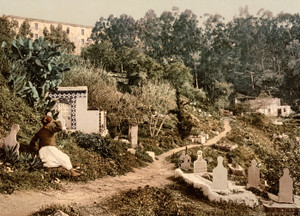 Art Prints of The Cemetery, Algiers, Algeria (387069)