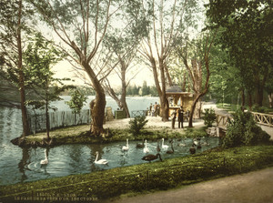 Art Prints of The Swans in the Park, Tete d'Or Lyons, France (387334)