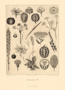Art Prints of Botanical Engraving Plate 2 by J. J. Grandville