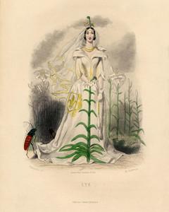 Art Prints of Lily by J. J. Grandville