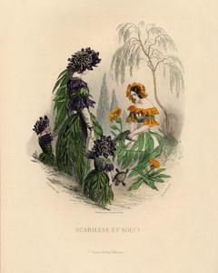 Art Prints of Mourning Bride and Marigold by J. J. Grandville