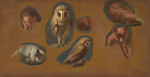 Art Prints of Fox, Barn Owl, Peahen and a Young Man by Jacques-Laurent Agasse