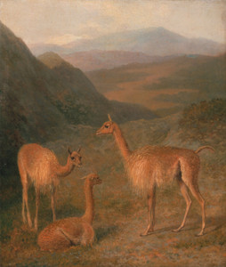 Art Prints of Vicunas by Jacques-Laurent Agasse
