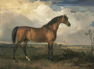 Art Prints of Eagle, a Celebrated Stallion by James Ward