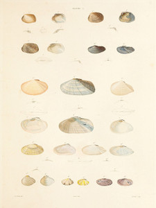 Art Prints of Shells, Plate 7 by Jean-Baptiste Lamarck