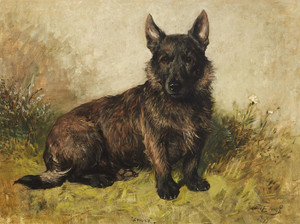 Art Prints of Spider, Portrait of a Scottish Terrier by John Emms