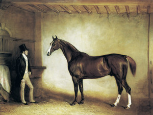 Art Prints of Cigar, Mr. Sterling Crawford's Hunter in a Stable by John Ferneley