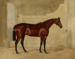 A Bay Horse in a Stable by John Frederick Herring | Fine Art Print