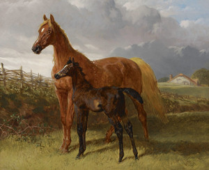 Art Prints of A Chestnut Mare and Foal in a Field by John Frederick Herring