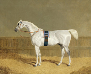 Art Prints of An Arab Stallion in a Loose Box by John Frederick Herring