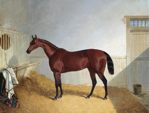 Art Prints of Beeswing, a Dark Bay Racehorse in a Stable by John Frederick Herring