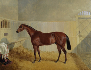 Art Prints of Chantilly, a Chestnut Horse in a Stable by John Frederick Herring