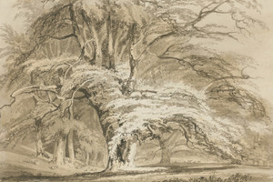 Art Prints of Beech Trees at Cassiobury Park by Joseph Mallord William Turner
