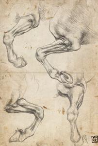 Art Prints of Studies of a Horse's Leg by Leonardo da Vinci