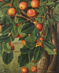Art Prints of Crab Apples Hanging from a Tree by Levi Wells Prentice