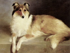 Art Prints of A Rough Collie by Lilian Cheviot