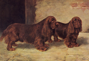 Art Prints of Sussex Spaniels by Lilian Cheviot
