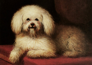Art Prints of Bichon Frise by Louis Eugene Lambert