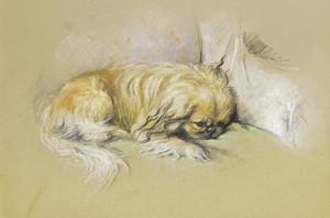 Art Prints of A Pekingese by Lucy Dawson