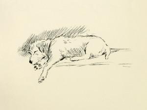 Art Prints of Bob by Lucy Dawson
