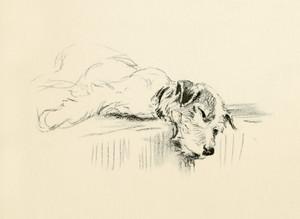 Art Prints of Bob II by Lucy Dawson