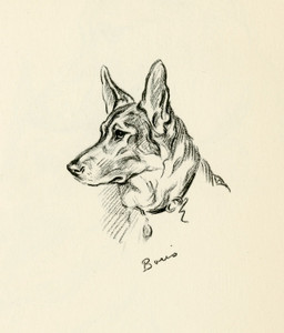 Art Prints of Boris, German Shepherd by Lucy Dawson