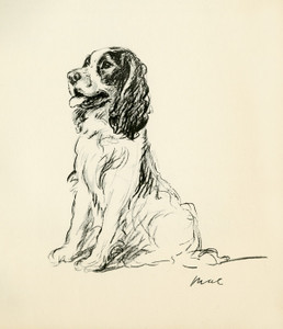 Art Prints of Cocker Spaniel, Mae by Lucy Dawson