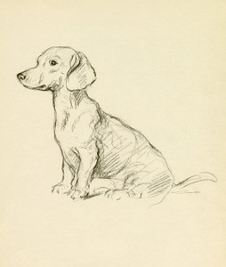 Art Prints of Dachshund by Lucy Dawson