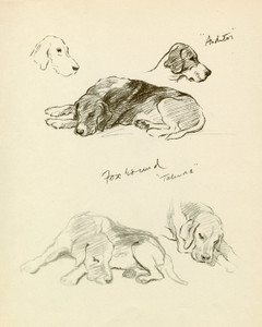 Art Prints of Foxhounds by Lucy Dawson