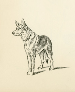 Art Prints of German Shepherd 2 by Lucy Dawson