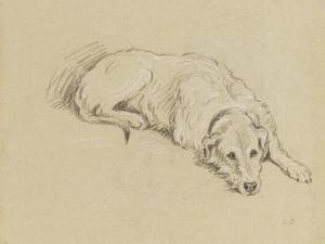 Art Prints of Garda, an Irish Wolf Hound by Lucy Dawson