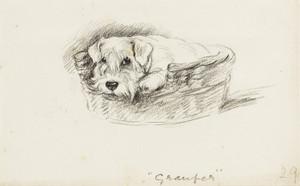 Art Prints of Gramper, Scottish Terrier by Lucy Dawson