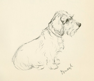 Art Prints of Oonagh 2, Wire Haired Dachshund by Lucy Dawson
