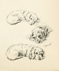 Art Prints of Oonagh 4, Wire Haired Dachshund by Lucy Dawson