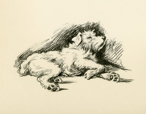 Art Prints of Patch Sleeping by Lucy Dawson